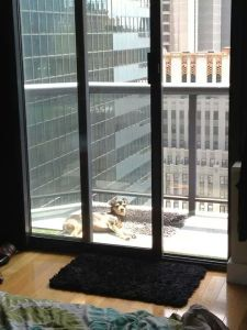 My Dog FInley, loved his new home in NYC.